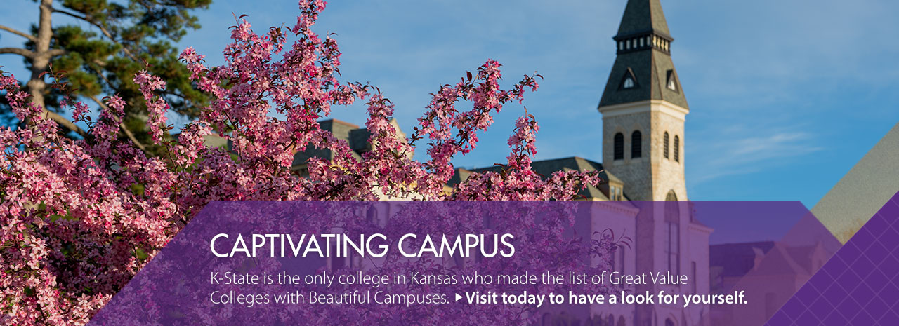 Captivating Campus