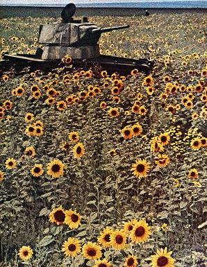 Tank in Sunflower Field