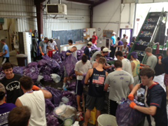 Acacia and Beta Theta Pi fraternity brothers for sorting recycling material