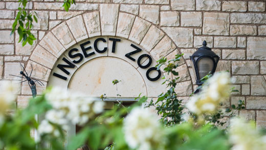 Insect Zoo