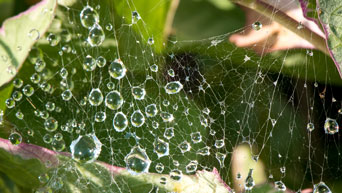 Water on a spider web