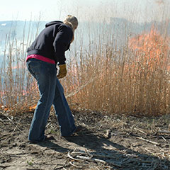 Using a drop torch to set a prescribed fire
