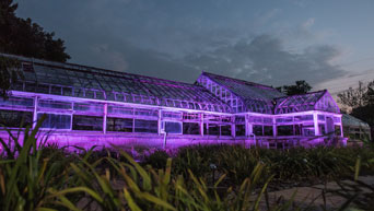 Purple lights shine on the historic Conservatory at the K-State Gardens.