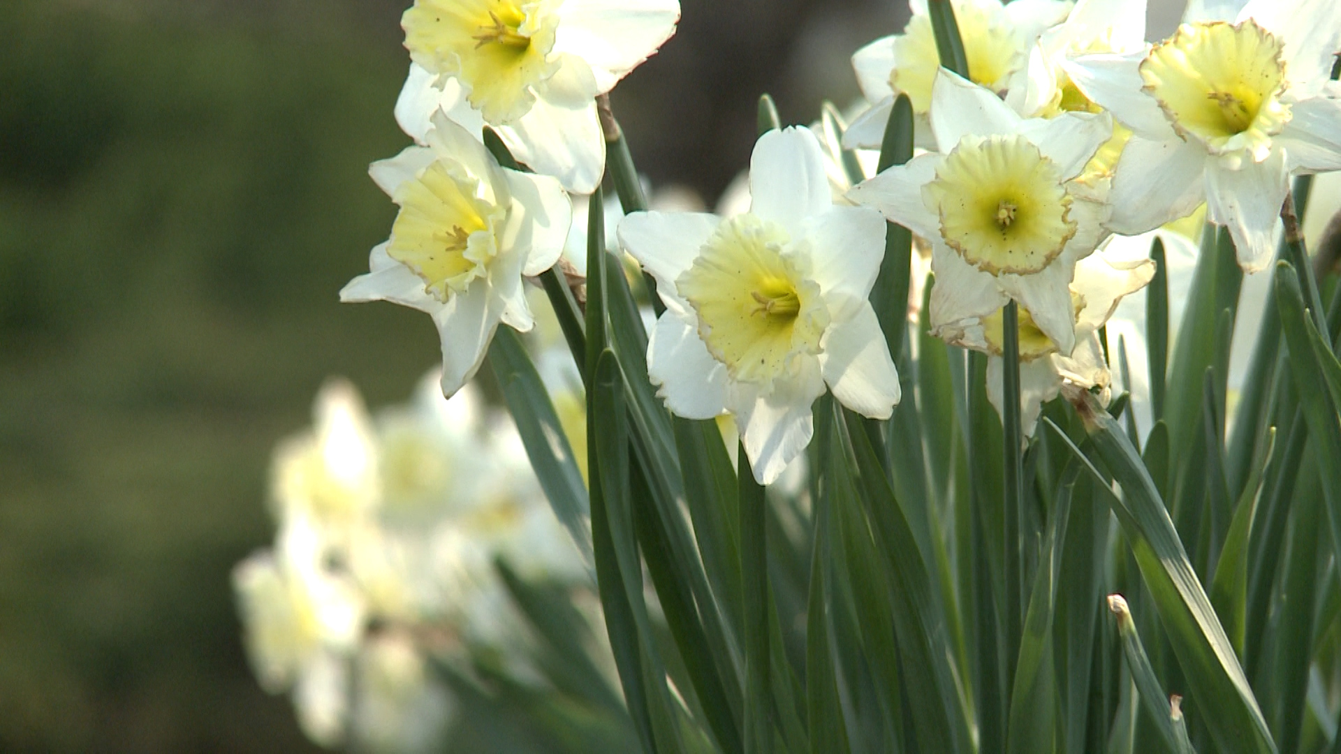 Expect to see spring pests despite extreme cold winter