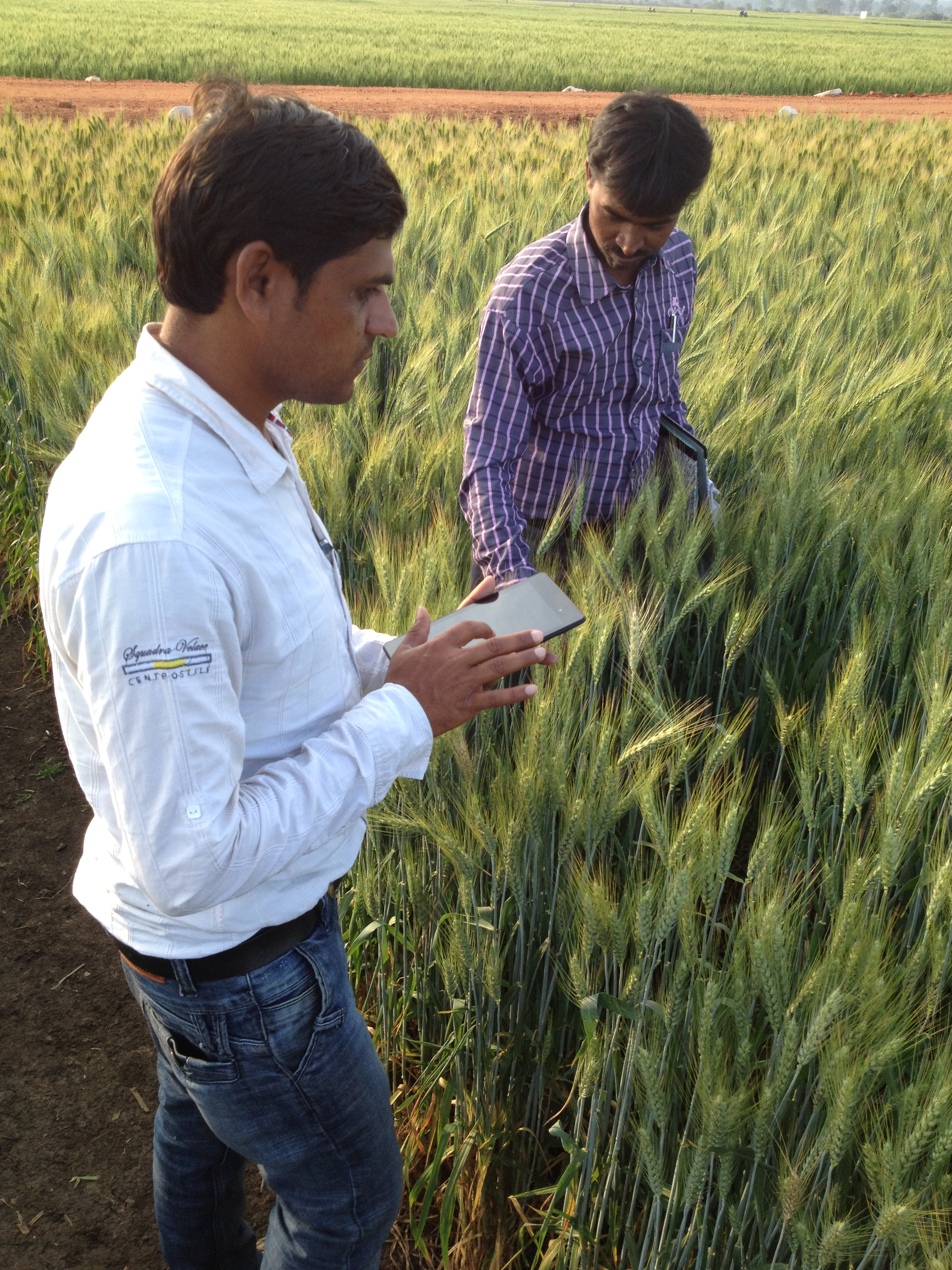 Scientists at the Borlaug Institute for South Asia in Jabalpur, India,