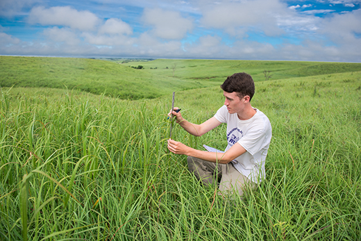 Researcher on Konza Prairie