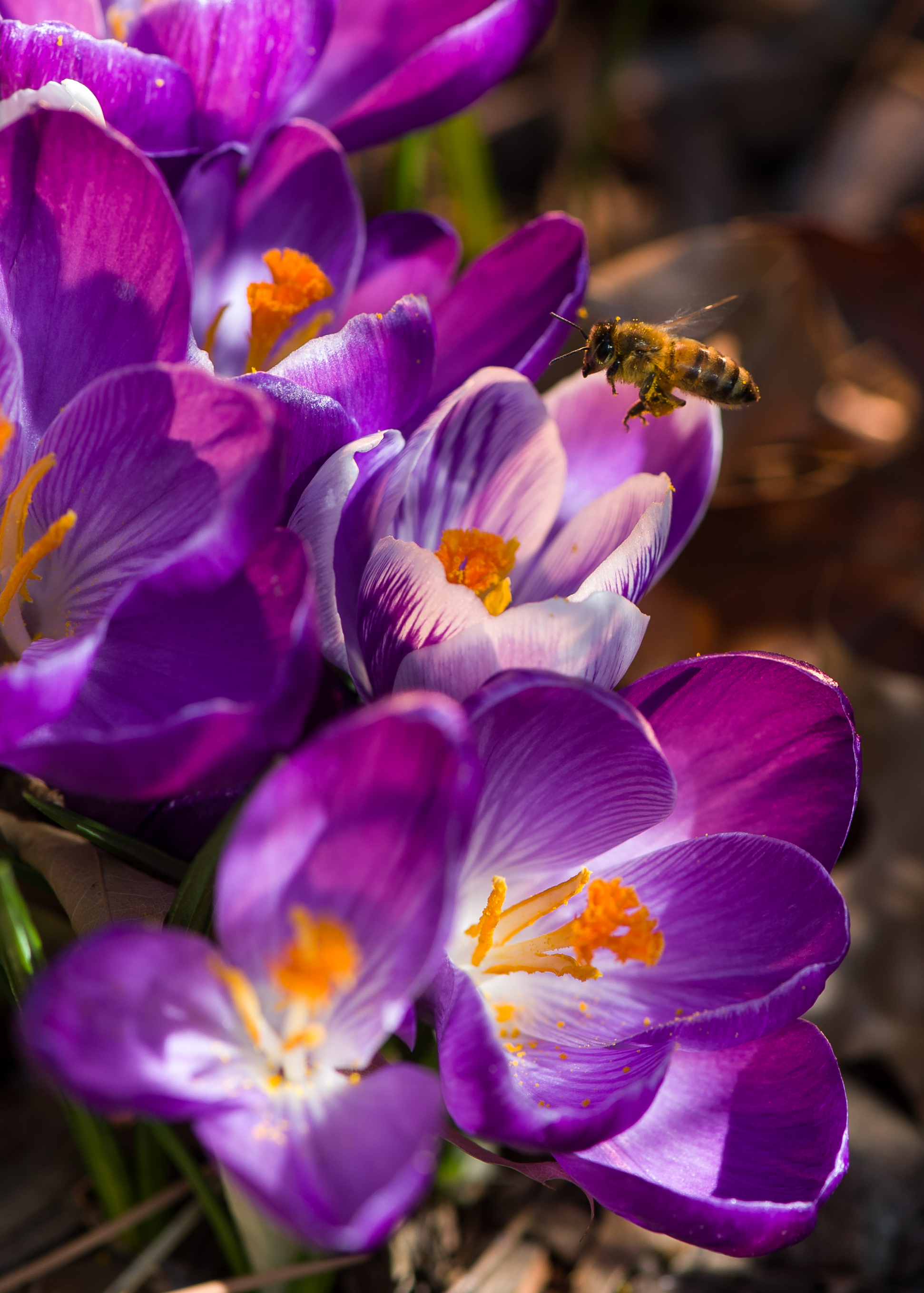 Sidebar Entomologists share some of the latest buzz on ways to keep bees aro