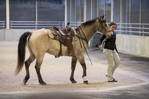 Horse and vet tech