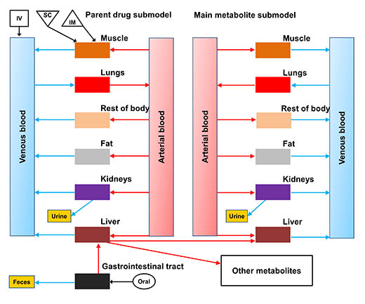 general physiologically based pharmacokinetic