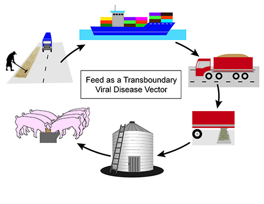 Feed as viral vector