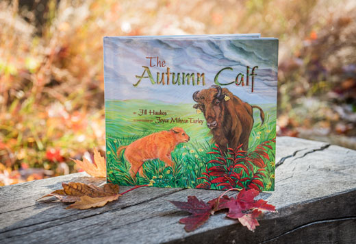 """The Autumn Calf"""