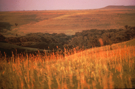 prairie