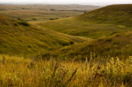 art showcasing the tallgrass prairie ecosystem