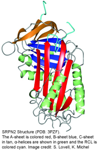 Crystal Structure of SRPN2