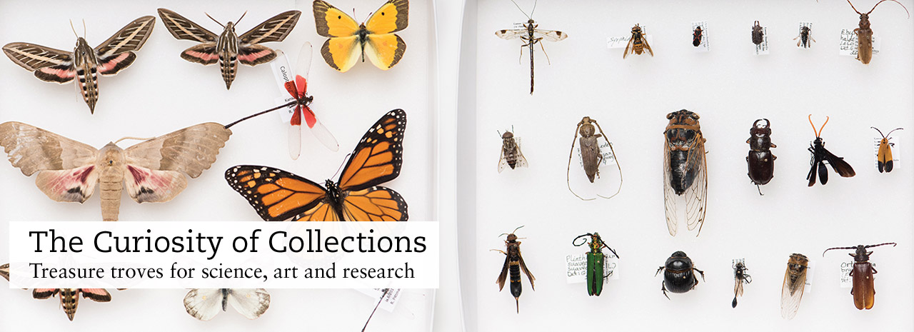 Curiosity of collections