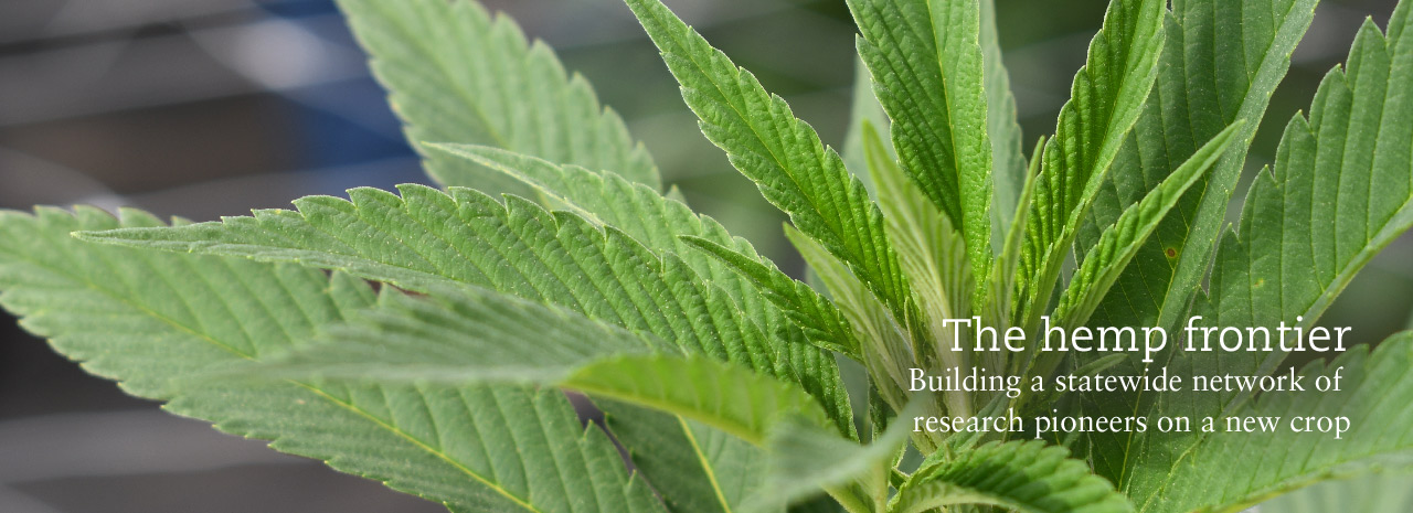The hemp frontier: Building a statewide network of research pioneers on a new crop