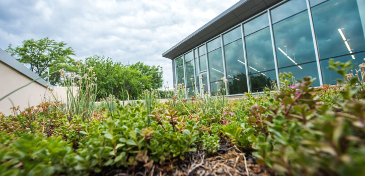 Green roof on Regnier Hall