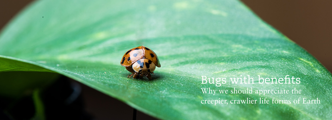 Bugs with benefits