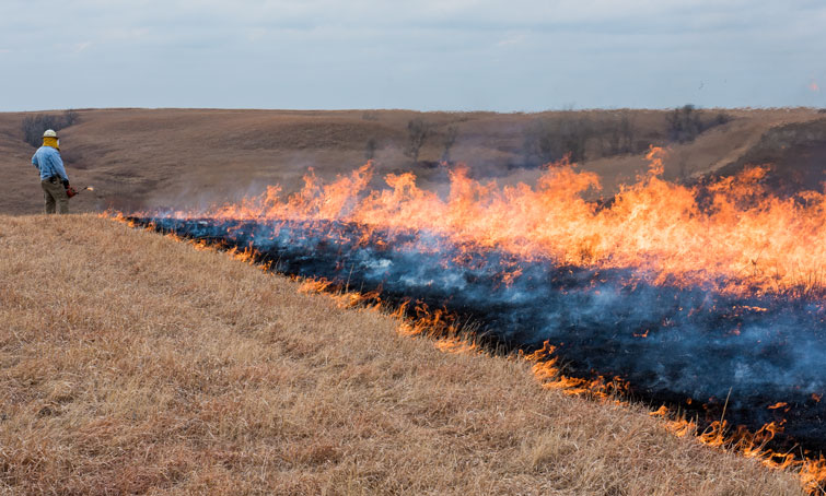 Head fire of prairie fire